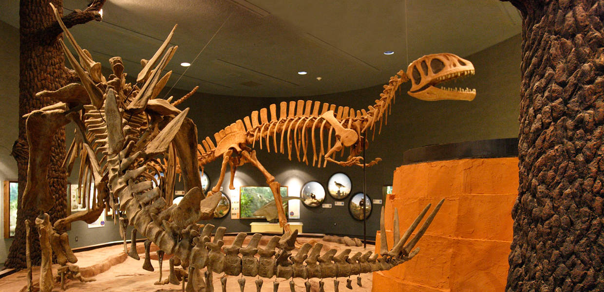 Delaware Museum of Natural History | Quest for the Best Charitable Foundation