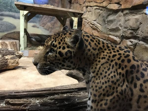 Elmwood Park Zoo | Quest for the Best